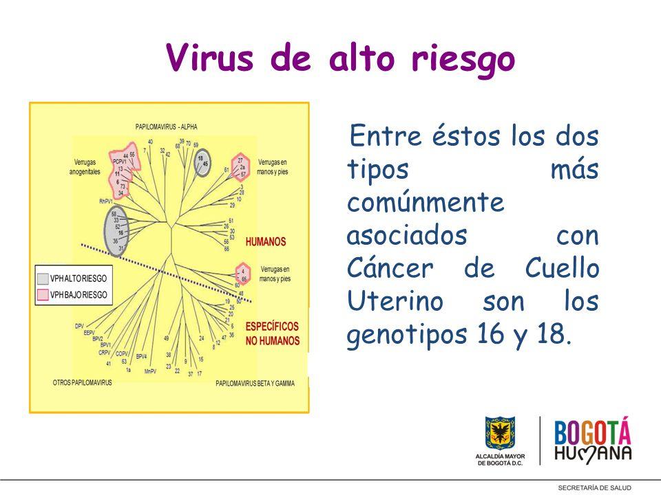 Virus de alto riesgo Entre éstos los dos tipos más comúnmente asociados con Cáncer de Cuello Uterino son los genotipos 16 y 18.