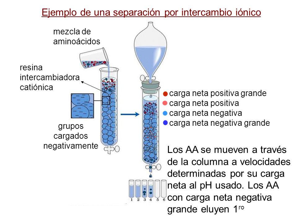grupos cargados negativamente mezcla de aminoácidos Ejemplo de una separación por intercambio iónico resina intercambiadora catiónica Los AA se mueven