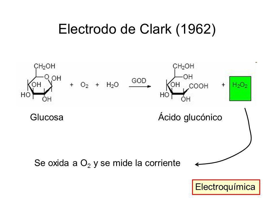 Electrodo de Clark (1962) Glucosa Ácido glucónico Se oxida a O 2 y se mide la corriente Electroquímica