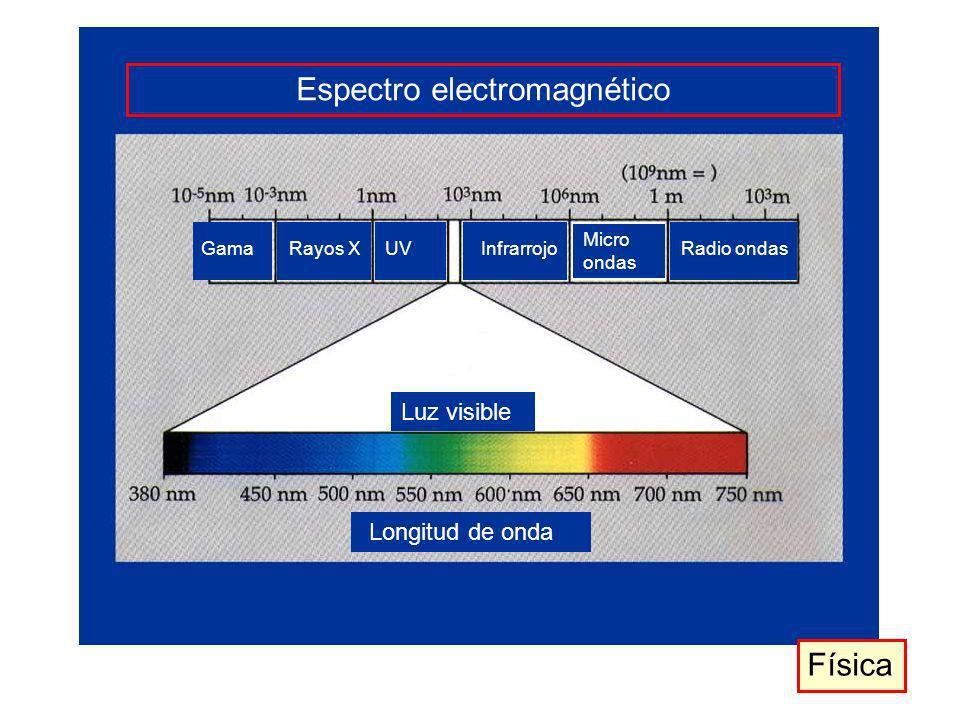 Espectro electromagnético Luz visible Longitud de onda GamaRayos XUVInfrarrojo Micro ondas Radio ondas Física