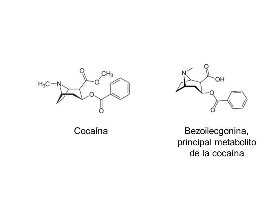 CocaínaBezoilecgonina, principal metabolito de la cocaína