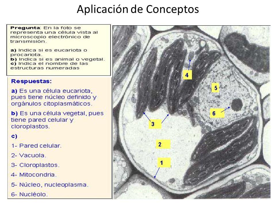 Aplicación de Conceptos