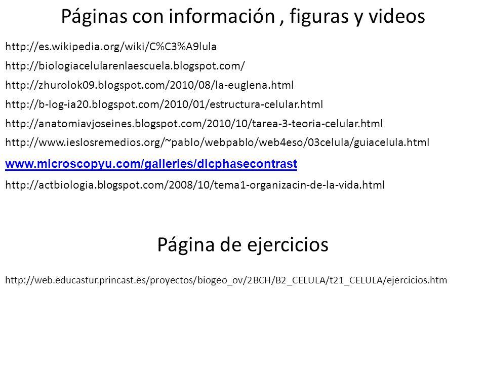 http://anatomiavjoseines.blogspot.com/2010/10/tarea-3-teoria-celular.html http://zhurolok09.blogspot.com/2010/08/la-euglena.html http://es.wikipedia.o
