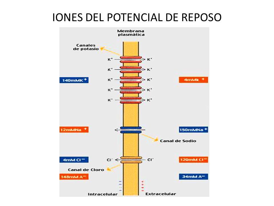 IONES DEL POTENCIAL DE REPOSO