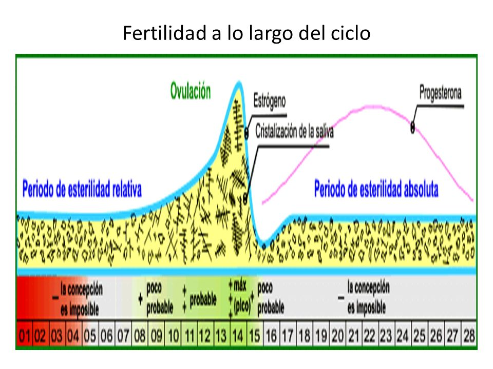 Fertilidad a lo largo del ciclo Dibujo 1.
