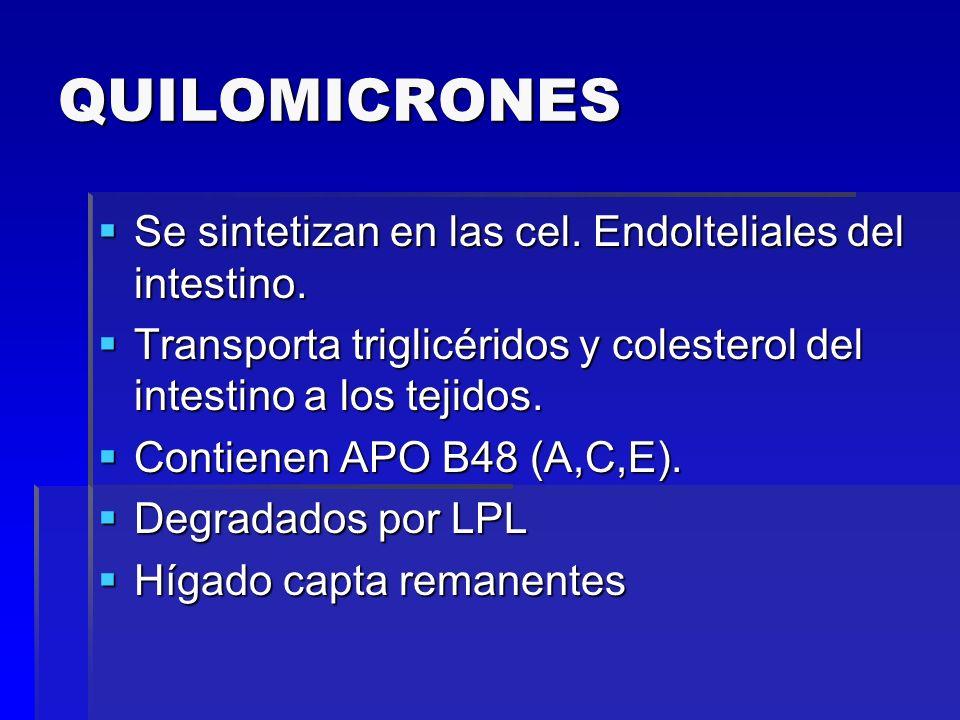 QUILOMICRONES Se sintetizan en las cel. Endolteliales del intestino. Se sintetizan en las cel. Endolteliales del intestino. Transporta triglicéridos y
