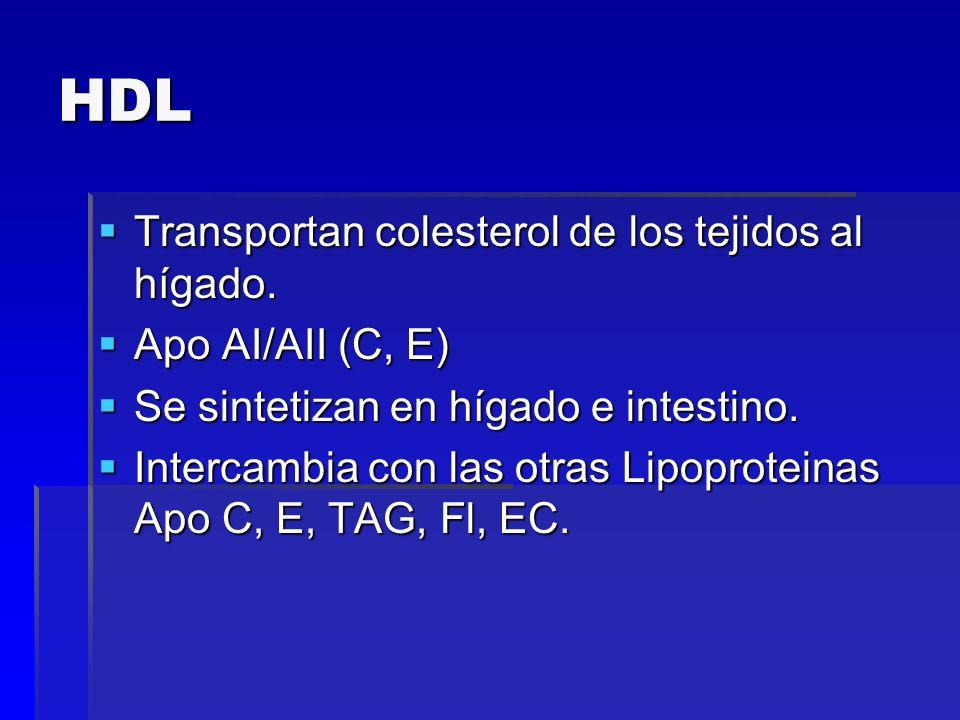 HDL Transportan colesterol de los tejidos al hígado. Transportan colesterol de los tejidos al hígado. Apo AI/AII (C, E) Apo AI/AII (C, E) Se sintetiza