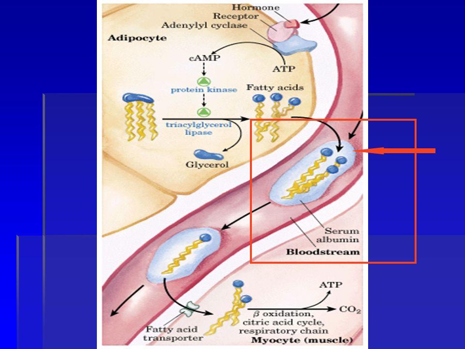 Metabolismo de VLDL- LDL