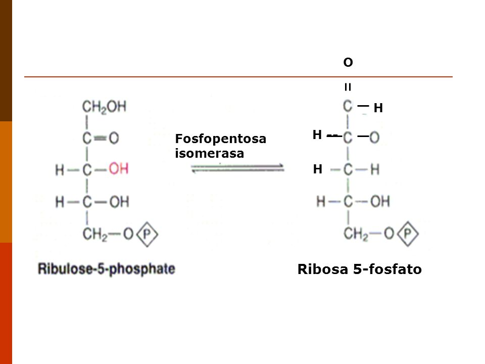 H H -- O H Ribosa 5-fosfato Fosfopentosa isomerasa