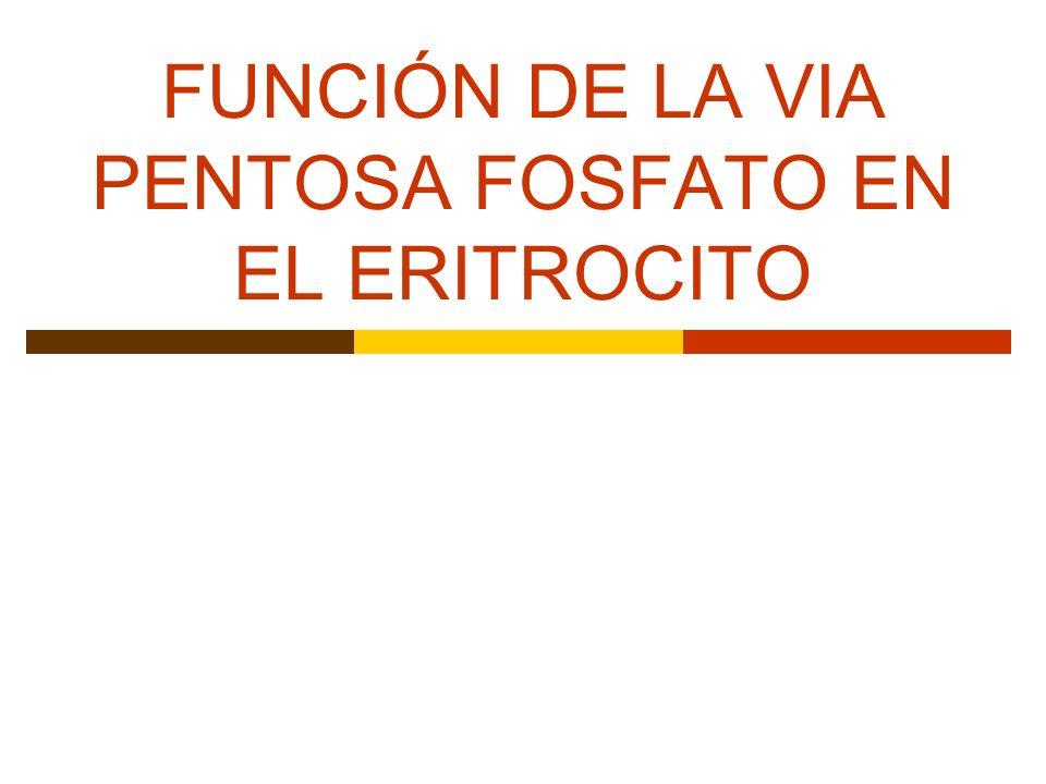 FUNCIÓN DE LA VIA PENTOSA FOSFATO EN EL ERITROCITO