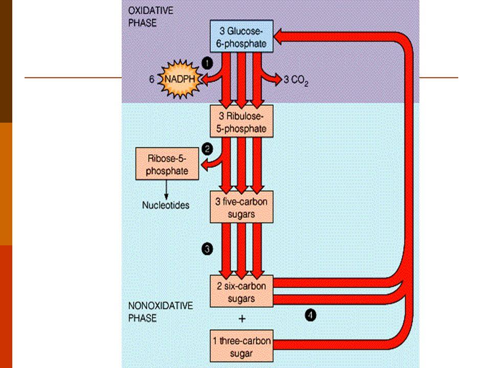 FUNCIONES: Generar equivalentes reductores (NADPH) que participan en reacciones de biosíntesis.