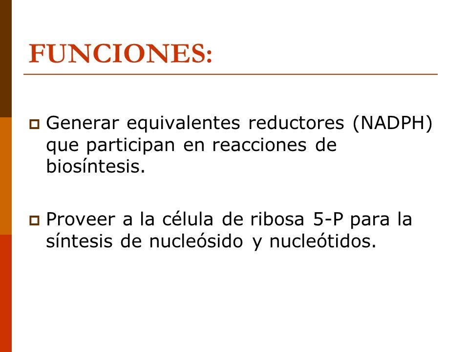FUNCIONES: Generar equivalentes reductores (NADPH) que participan en reacciones de biosíntesis. Proveer a la célula de ribosa 5-P para la síntesis de