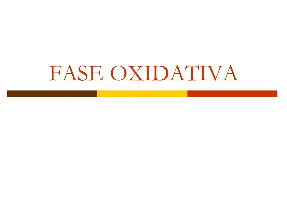 FASE OXIDATIVA