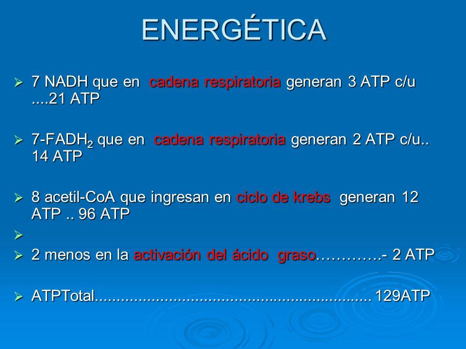 ENERGÉTICA 7 NADH que en cadena respiratoria generan 3 ATP c/u....21 ATP 7 NADH que en cadena respiratoria generan 3 ATP c/u....21 ATP 7-FADH 2 que en