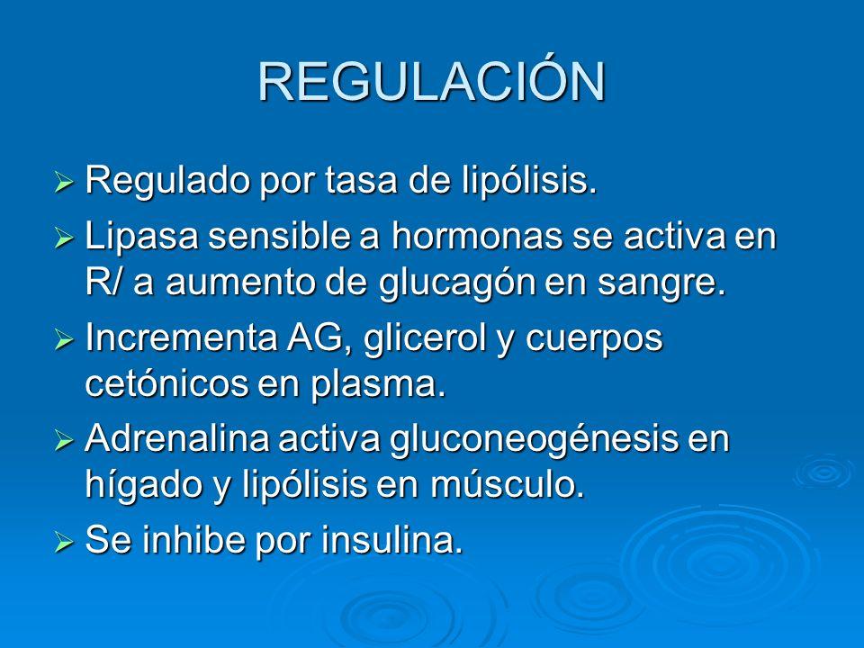 REGULACIÓN Regulado por tasa de lipólisis. Regulado por tasa de lipólisis. Lipasa sensible a hormonas se activa en R/ a aumento de glucagón en sangre.