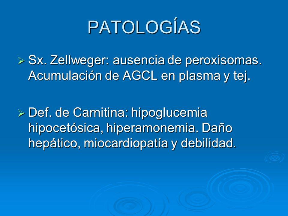 PATOLOGÍAS Sx. Zellweger: ausencia de peroxisomas. Acumulación de AGCL en plasma y tej. Sx. Zellweger: ausencia de peroxisomas. Acumulación de AGCL en