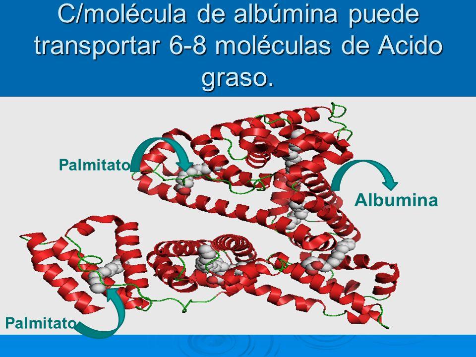 Palmitato Albumina C/molécula de albúmina puede transportar 6-8 moléculas de Acido graso.
