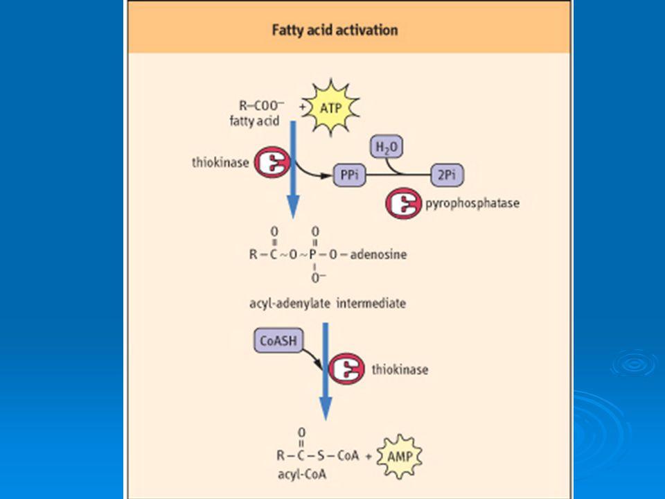 CETOGÉNESIS Proceso mitocondrial Proceso mitocondrial Se da en hígado (HMG-S e HMG-L) Se da en hígado (HMG-S e HMG-L) Se inicia en ayuno o inanición Se inicia en ayuno o inanición Son captados por tej.