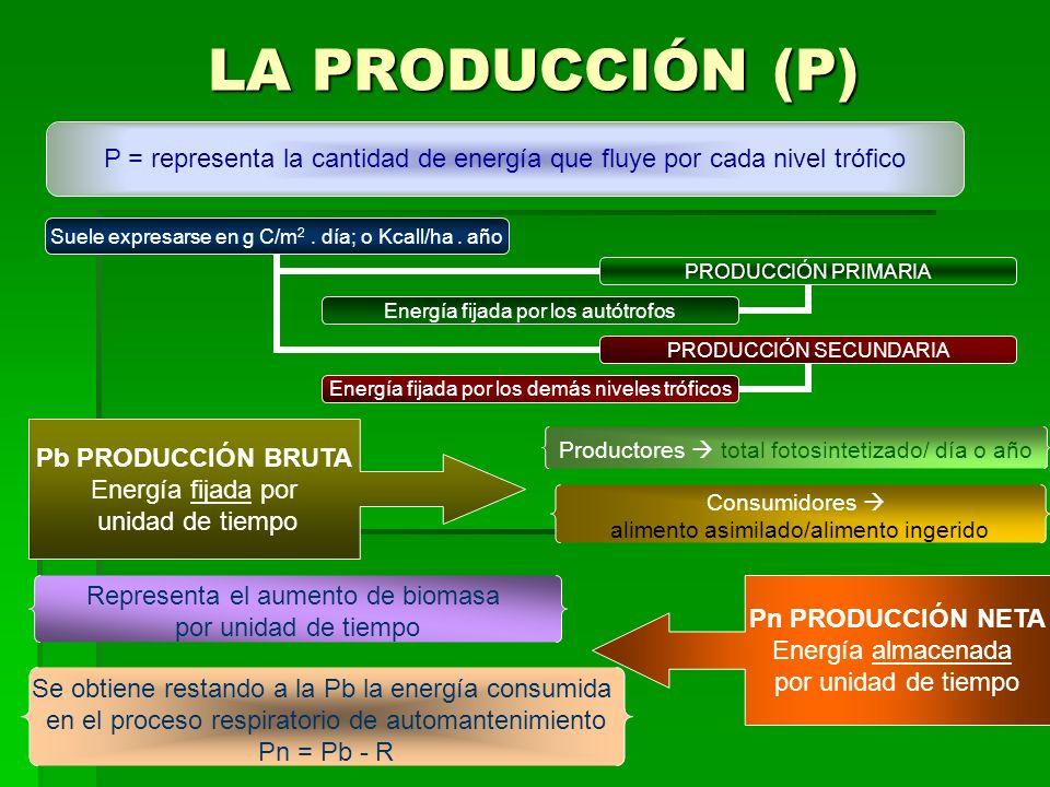 LA PRODUCCIÓN (P) P = representa la cantidad de energía que fluye por cada nivel trófico Suele expresarse en g C/m 2. día; o Kcall/ha. año PRODUCCIÓN