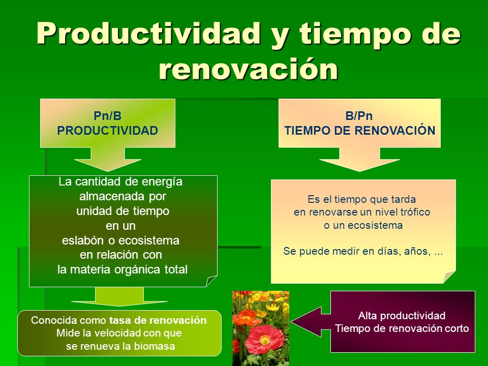 Productividad y tiempo de renovación Pn/B PRODUCTIVIDAD B/Pn TIEMPO DE RENOVACIÓN La cantidad de energía almacenada por unidad de tiempo en un eslabón o ecosistema en relación con la materia orgánica total Es el tiempo que tarda en renovarse un nivel trófico o un ecosistema Se puede medir en días, años,...