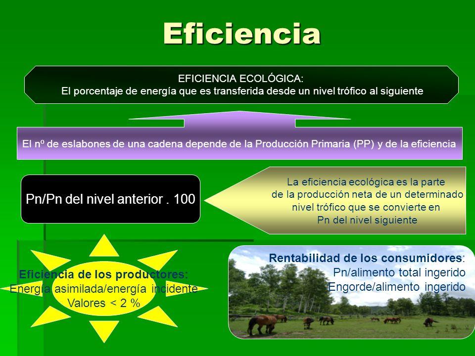 Eficiencia EFICIENCIA ECOLÓGICA: El porcentaje de energía que es transferida desde un nivel trófico al siguiente El nº de eslabones de una cadena depende de la Producción Primaria (PP) y de la eficiencia Pn/Pn del nivel anterior.