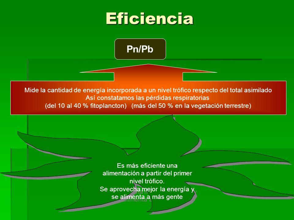 Eficiencia Pn/Pb Mide la cantidad de energía incorporada a un nivel trófico respecto del total asimilado Así constatamos las pérdidas respiratorias (del 10 al 40 % fitoplancton) (más del 50 % en la vegetación terrestre) Es más eficiente una alimentación a partir del primer nivel trófico.
