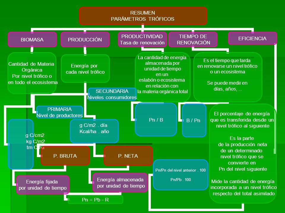 RESUMEN PARÁMETROS TRÓFICOS BIOMASA Cantidad de Materia Orgánica Por nivel trófico o en todo el ecosistema g C/cm2 kg C/m2 tm C/hag C/cm2 kg C/m2 tm C/ha PRODUCCIÓN Energía por cada nivel trófico PRIMARIA Nivel de productores SECUNDARIA Niveles consumidores g C/m2.
