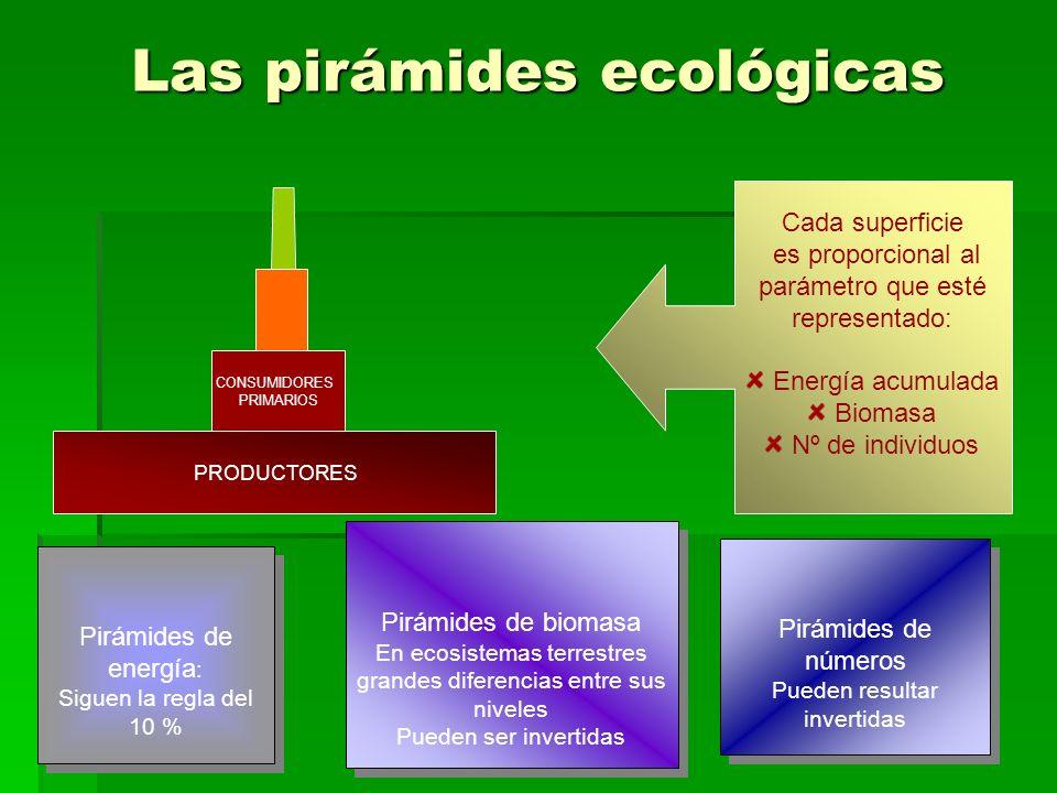 Las pirámides ecológicas CONSUMIDORES PRIMARIOS PRODUCTORES Cada superficie es proporcional al parámetro que esté representado: Energía acumulada Biomasa Nº de individuos Pirámides de energía : Siguen la regla del 10 % Pirámides de energía : Siguen la regla del 10 % Pirámides de biomasa En ecosistemas terrestres grandes diferencias entre sus niveles Pueden ser invertidas Pirámides de biomasa En ecosistemas terrestres grandes diferencias entre sus niveles Pueden ser invertidas Pirámides de números Pueden resultar invertidas Pirámides de números Pueden resultar invertidas