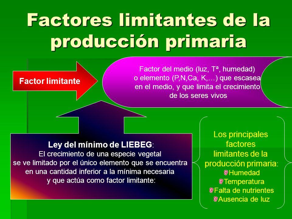 Factores limitantes de la producción primaria Factor limitante Factor del medio (luz, Tª, humedad) o elemento (P,N,Ca, K,…) que escasea en el medio, y