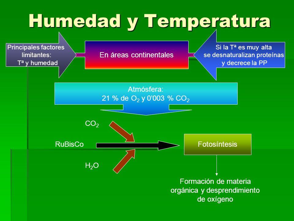 Humedad y Temperatura En áreas continentales Principales factores limitantes: Tª y humedad Si la Tª es muy alta se desnaturalizan proteínas y decrece la PP Atmósfera: 21 % de O 2 y 0003 % CO 2 RuBisCo Fotosíntesis CO 2 H 2 O Formación de materia orgánica y desprendimiento de oxígeno