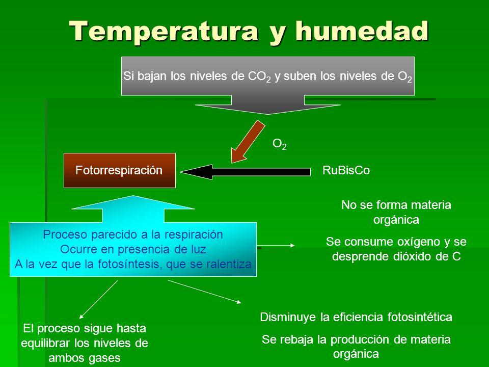 Temperatura y humedad Si bajan los niveles de CO 2 y suben los niveles de O 2 RuBisCo O 2 Fotorrespiración Proceso parecido a la respiración Ocurre en presencia de luz A la vez que la fotosíntesis, que se ralentiza No se forma materia orgánica Se consume oxígeno y se desprende dióxido de C El proceso sigue hasta equilibrar los niveles de ambos gases Disminuye la eficiencia fotosintética Se rebaja la producción de materia orgánica