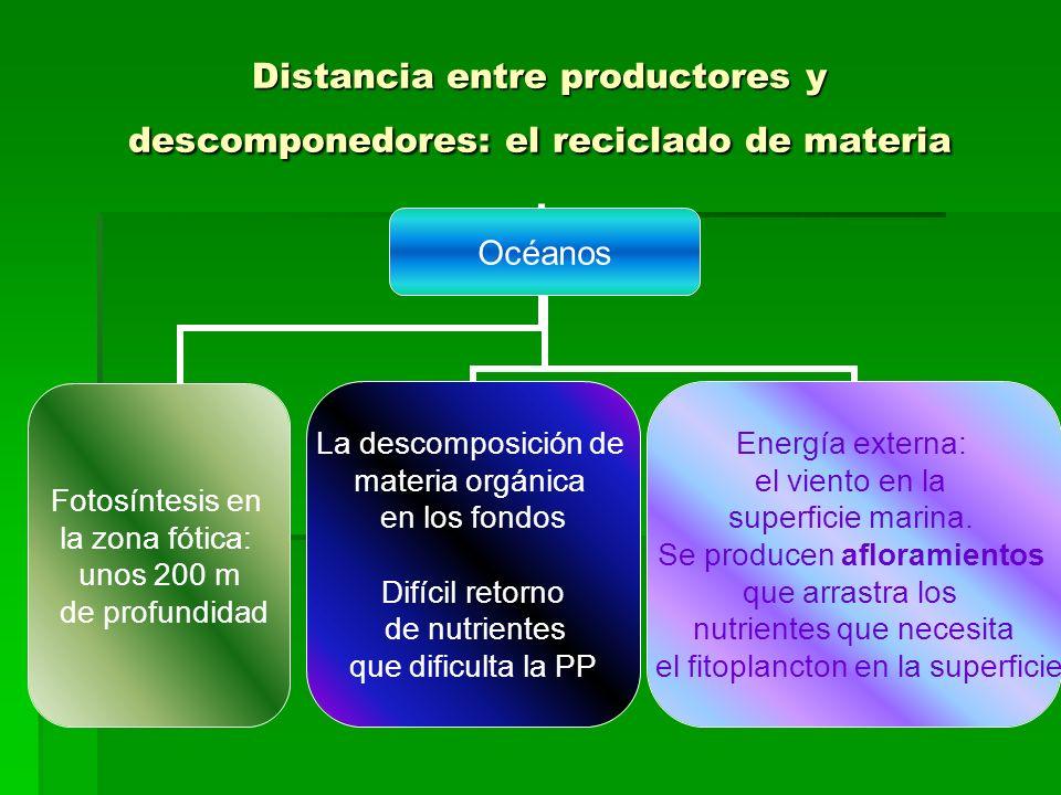 Distancia entre productores y descomponedores: el reciclado de materia Océanos Fotosíntesis en la zona fótica: unos 200 m de profundidad La descomposición de materia orgánica en los fondos Difícil retorno de nutrientes que dificulta la PP Energía externa: el viento en la superficie marina.