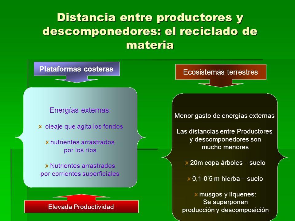 Distancia entre productores y descomponedores: el reciclado de materia Plataformas costeras Energías externas : oleaje que agita los fondos nutrientes