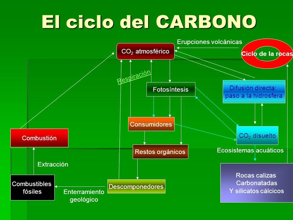 El ciclo del CARBONO CO 2 atmosférico Fotosíntesis Difusión directa: paso a la hidrosfera Consumidores R e s p i r a c i ó n Restos orgánicos Descomponedores Combustibles fósiles Enterramiento geológico Extracción Combustión CO 2 disuelto Ecosistemas acuáticos Rocas calizas Carbonatadas Y silicatos cálcicos Ciclo de la rocas Erupciones volcánicas