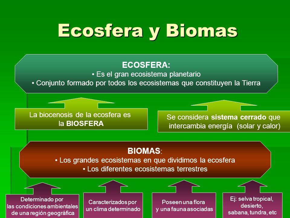 Ecosfera y Biomas ECOSFERA: Es el gran ecosistema planetario Conjunto formado por todos los ecosistemas que constituyen la Tierra La biocenosis de la ecosfera es la BIOSFERA Se considera sistema cerrado que intercambia energía (solar y calor) BIOMAS : Los grandes ecosistemas en que dividimos la ecosfera Los diferentes ecosistemas terrestres Determinado por las condiciones ambientales de una región geográfica Caracterizados por un clima determinado Poseen una flora y una fauna asociadas Ej: selva tropical, desierto, sabana, tundra, etc