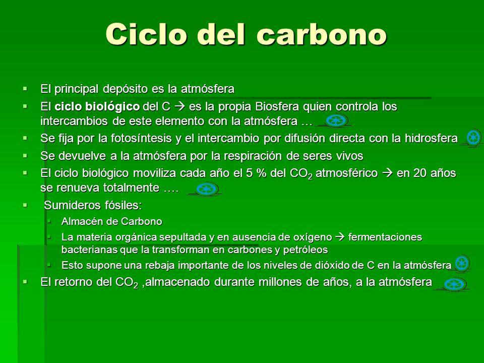 Ciclo del carbono El principal depósito es la atmósfera El principal depósito es la atmósfera El ciclo biológico del C es la propia Biosfera quien controla los intercambios de este elemento con la atmósfera … El ciclo biológico del C es la propia Biosfera quien controla los intercambios de este elemento con la atmósfera … Se fija por la fotosíntesis y el intercambio por difusión directa con la hidrosfera Se fija por la fotosíntesis y el intercambio por difusión directa con la hidrosfera Se devuelve a la atmósfera por la respiración de seres vivos Se devuelve a la atmósfera por la respiración de seres vivos El ciclo biológico moviliza cada año el 5 % del CO 2 atmosférico en 20 años se renueva totalmente ….