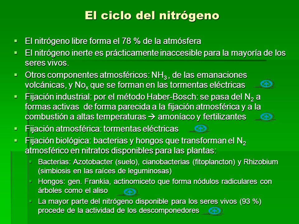El ciclo del nitrógeno El nitrógeno libre forma el 78 % de la atmósfera El nitrógeno inerte es prácticamente inaccesible para la mayoría de los seres vivos.