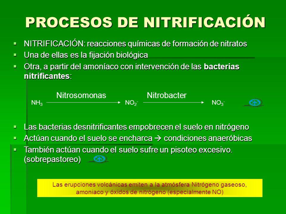 PROCESOS DE NITRIFICACIÓN NITRIFICACIÓN: reacciones químicas de formación de nitratos NITRIFICACIÓN: reacciones químicas de formación de nitratos Una de ellas es la fijación biológica Una de ellas es la fijación biológica Otra, a partir del amoníaco con intervención de las bacterias nitrificantes: Otra, a partir del amoníaco con intervención de las bacterias nitrificantes: NH 3 NO 2 - NO 3 - NitrosomonasNitrobacter Las bacterias desnitrificantes empobrecen el suelo en nitrógeno Las bacterias desnitrificantes empobrecen el suelo en nitrógeno Actúan cuando el suelo se encharca condiciones anaeróbicas Actúan cuando el suelo se encharca condiciones anaeróbicas También actúan cuando el suelo sufre un pisoteo excesivo.