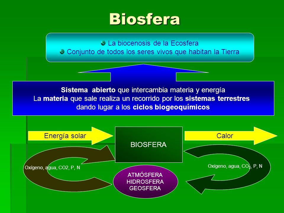 Biosfera La biocenosis de la Ecosfera Conjunto de todos los seres vivos que habitan la Tierra Sistema abierto que intercambia materia y energía La materia que sale realiza un recorrido por los sistemas terrestres dando lugar a los ciclos biogeoquímicos BIOSFERA Energía solarCalor Oxígeno, agua, CO2, P, N ATMÓSFERA HIDROSFERA GEOSFERA