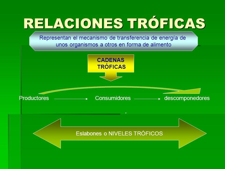 RELACIONES TRÓFICAS Representan el mecanismo de transferencia de energía de unos organismos a otros en forma de alimento CADENAS TRÓFICAS ProductoresConsumidoresdescomponedores Eslabones o NIVELES TRÓFICOS