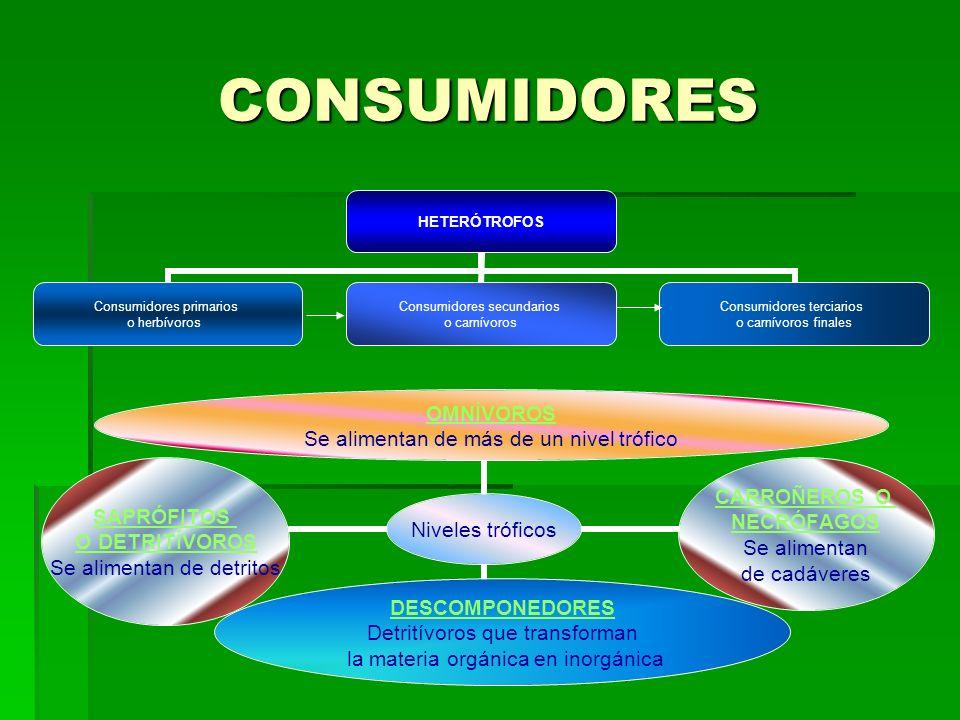 CONSUMIDORES HETERÓTROFOS Consumidores primarios o herbívoros Consumidores secundarios o carnívoros Consumidores terciarios o carnívoros finales Niveles tróficos OMNÍVOROS Se alimentan de más de un nivel trófico CARROÑEROS O NECRÓFAGOS Se alimentan de cadáveres DESCOMPONEDO RES Detritívoros que transforman la materia orgánica en inorgánica SAPRÓFITOS O DETRITÍVOROS Se alimentan de detritos