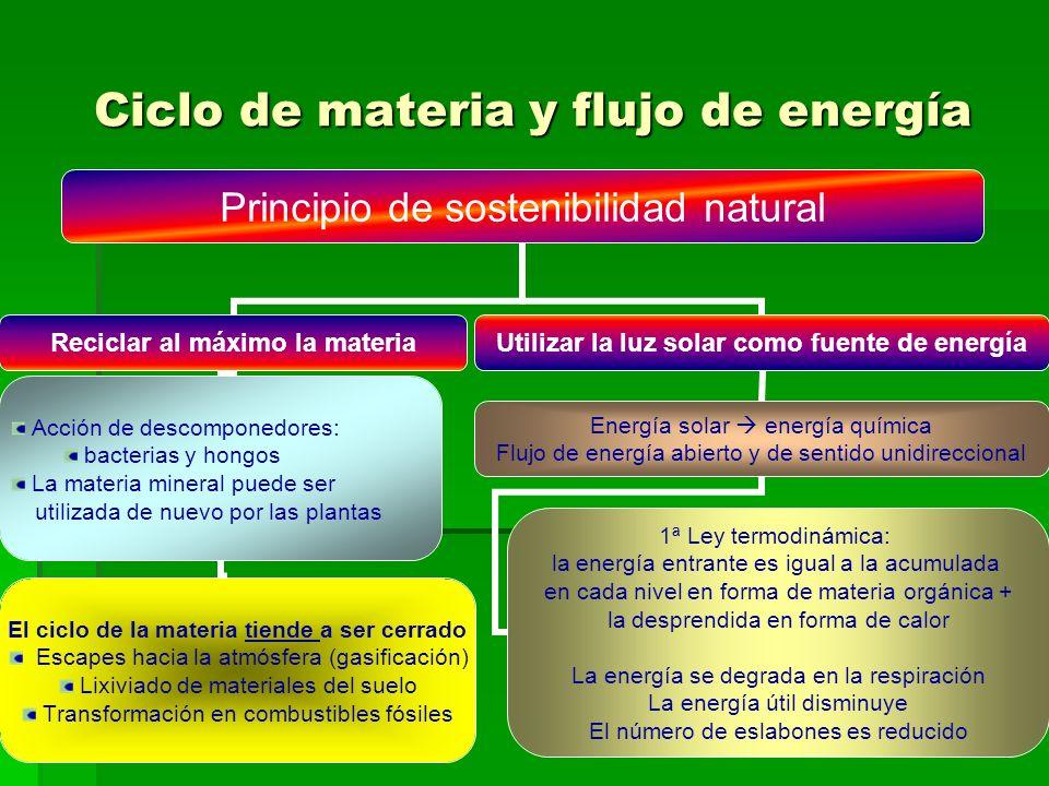 Ciclo de materia y flujo de energía Principio de sostenibilidad natural Reciclar al máximo la materia Acción de descomponedores: bacterias y hongos La materia mineral puede ser utilizada de nuevo por las plantas El ciclo de la materia tiende a ser cerrado Escapes hacia la atmósfera (gasificación) Lixiviado de materiales del suelo Transformación en combustibles fósiles Utilizar la luz solar como fuente de energía Energía solar energía química Flujo de energía abierto y de sentido unidireccional 1ª Ley termodinámica: la energía entrante es igual a la acumulada en cada nivel en forma de materia orgánica + la desprendida en forma de calor La energía se degrada en la respiración La energía útil disminuye El número de eslabones es reducido