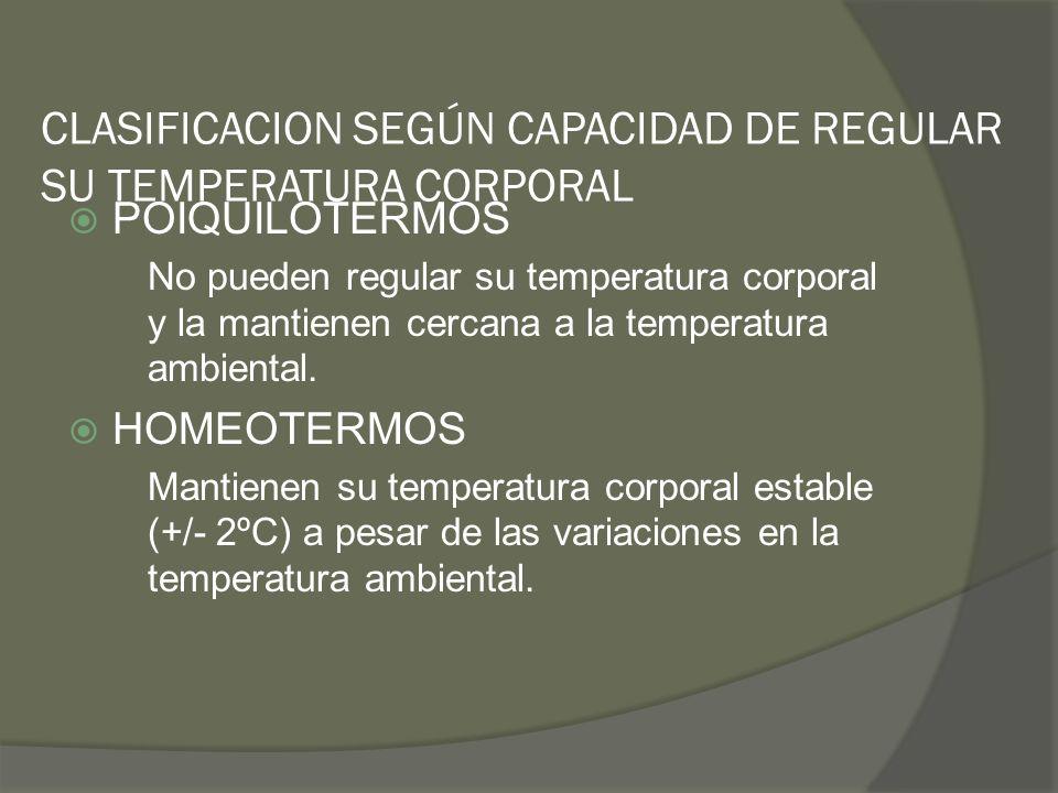 CLASIFICACION SEGÚN CAPACIDAD DE REGULAR SU TEMPERATURA CORPORAL POIQUILOTERMOS No pueden regular su temperatura corporal y la mantienen cercana a la