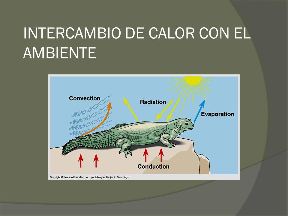 INTERCAMBIO DE CALOR CON EL AMBIENTE