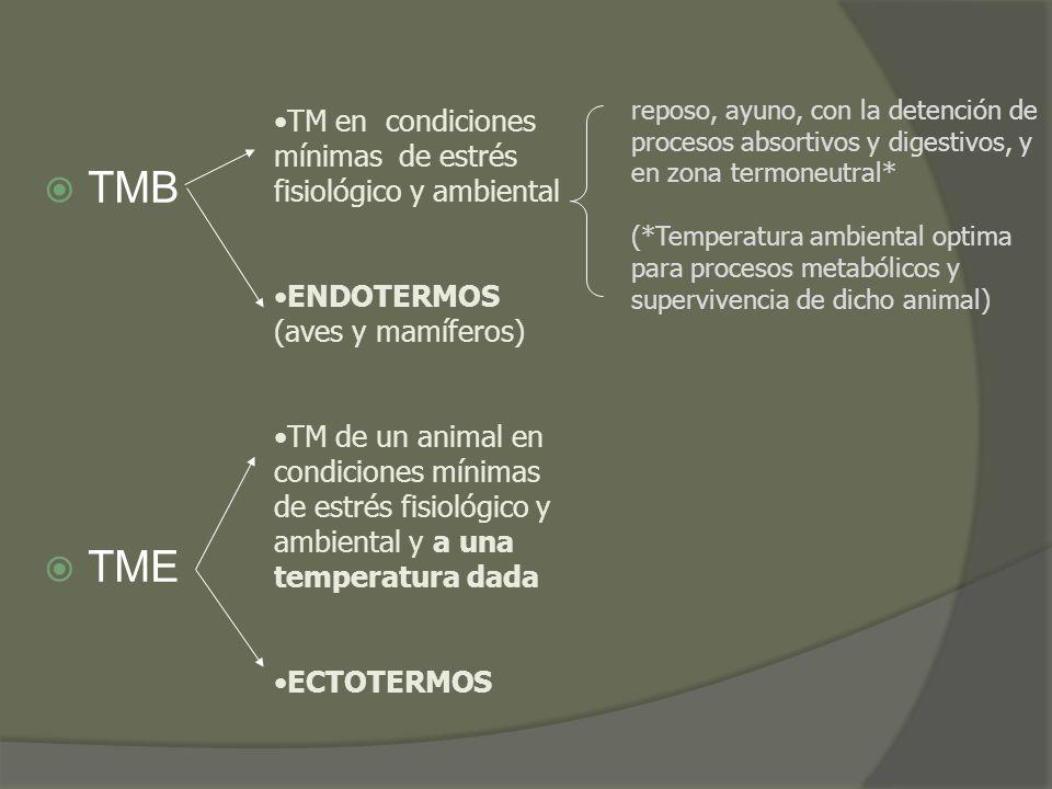 TMB TME TM en condiciones mínimas de estrés fisiológico y ambiental ENDOTERMOS (aves y mamíferos) TM de un animal en condiciones mínimas de estrés fis