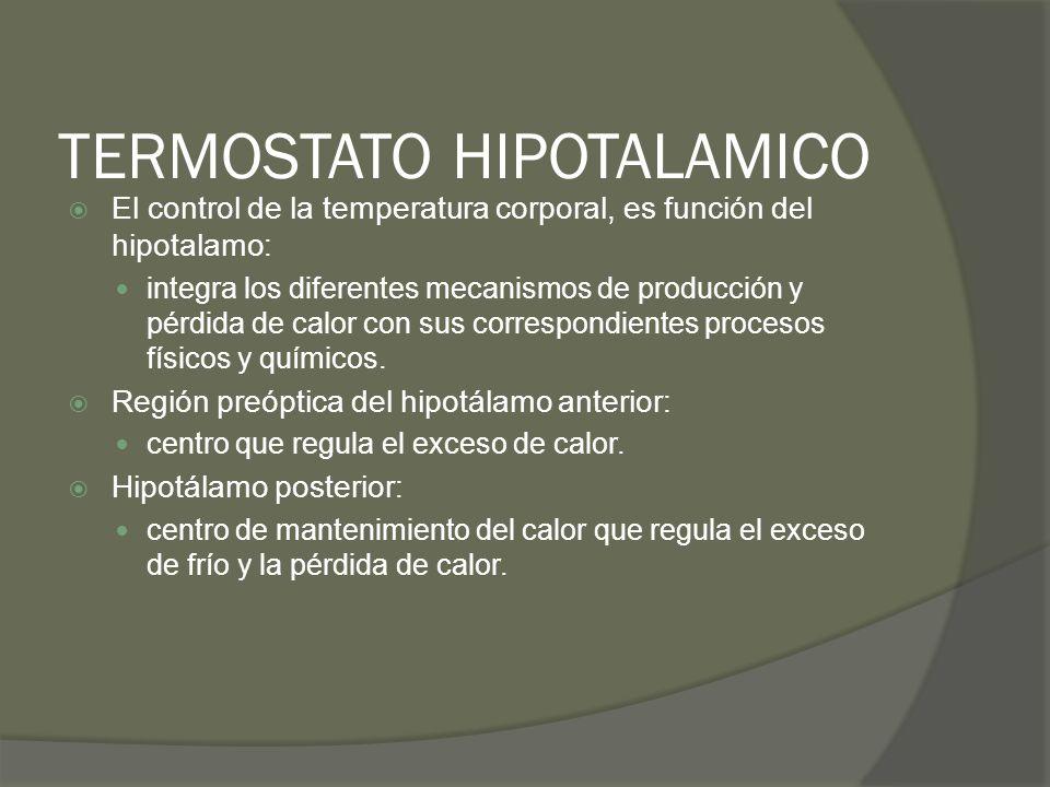 TERMOSTATO HIPOTALAMICO El control de la temperatura corporal, es función del hipotalamo: integra los diferentes mecanismos de producción y pérdida de