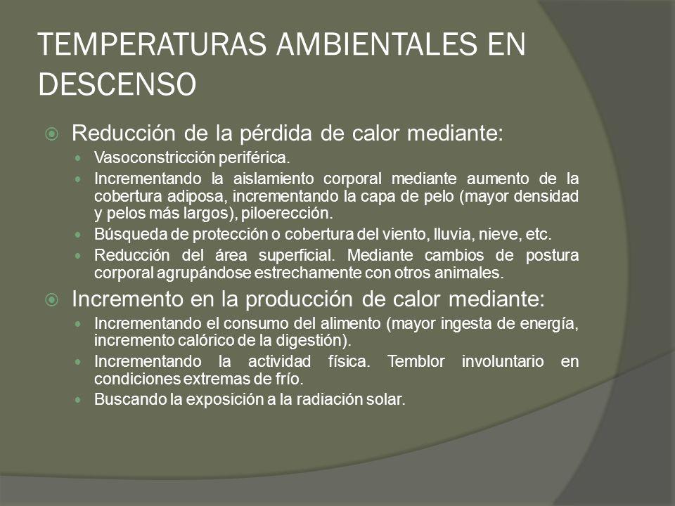 TEMPERATURAS AMBIENTALES EN DESCENSO Reducción de la pérdida de calor mediante: Vasoconstricción periférica. Incrementando la aislamiento corporal med