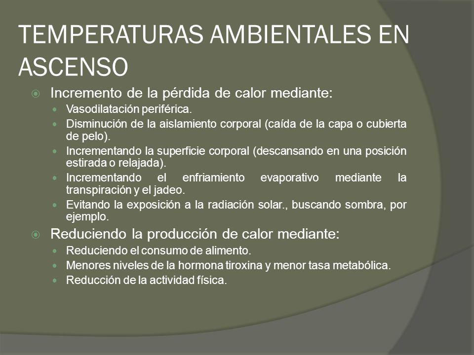 TEMPERATURAS AMBIENTALES EN ASCENSO Incremento de la pérdida de calor mediante: Vasodilatación periférica. Disminución de la aislamiento corporal (caí