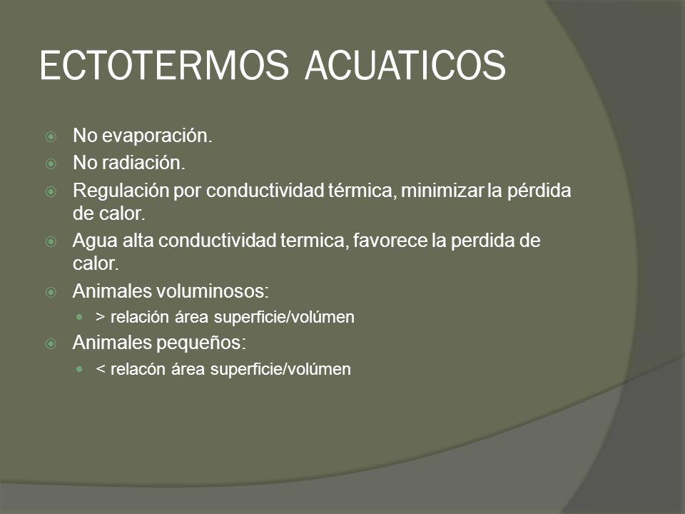 ECTOTERMOS ACUATICOS No evaporación. No radiación. Regulación por conductividad térmica, minimizar la pérdida de calor. Agua alta conductividad termic
