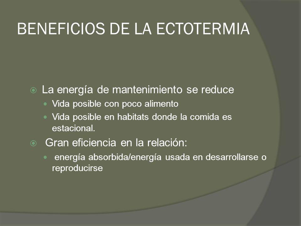 BENEFICIOS DE LA ECTOTERMIA La energía de mantenimiento se reduce Vida posible con poco alimento Vida posible en habitats donde la comida es estaciona